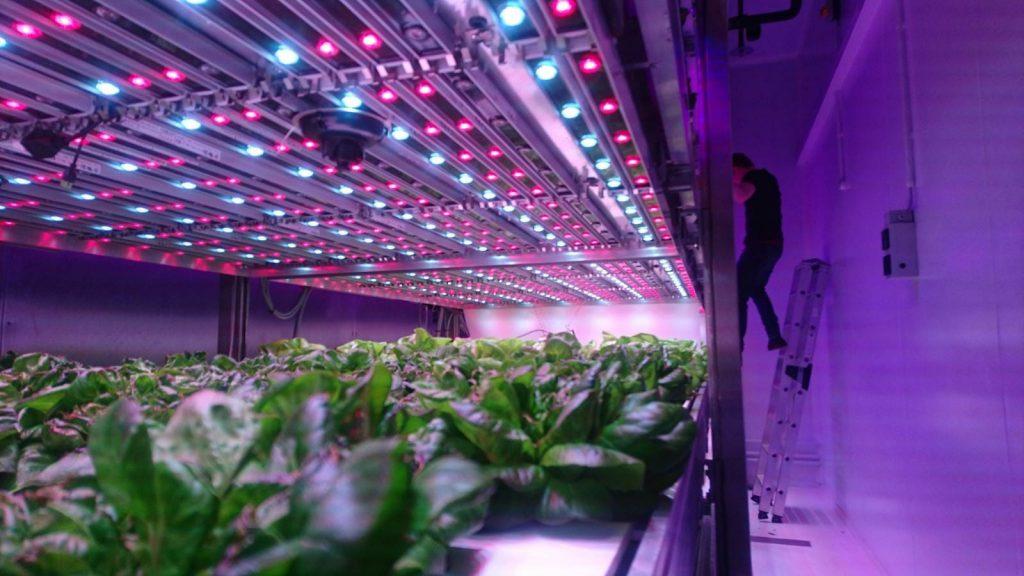Vertical Farming – Agrodite